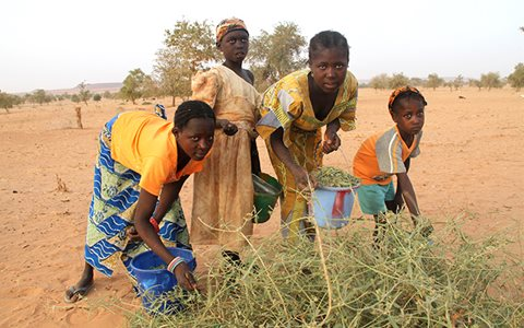 children-eating-leaves-for-survival-i-niger