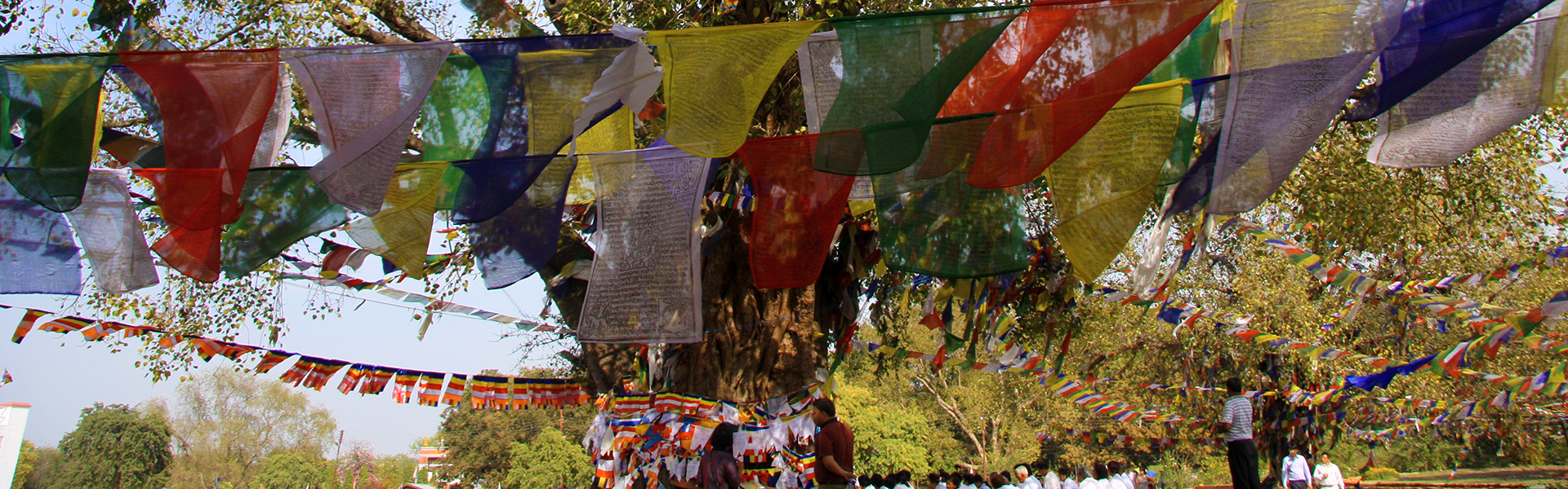 nepal-prayer-flags-in-tree
